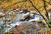 Bull Creek Prints - Mill Creek  Print by JC Findley