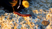 Skyline Photos - Millipede - 2011 by Chuck Smith