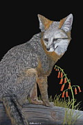 Fox Pastels Prints - Minding the Den Print by Heather Ward