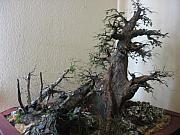 Nelbert  Flores - Mini Forest Sculpture -...