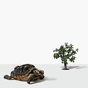 Bonsai Tree Posters - Mini Tree And Turtle Poster by Fotografias de Rodolfo Velasco