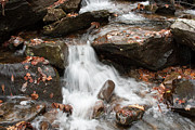 Mini Waterfall Framed Prints - Mini Waterfall Framed Print by Michael Waters