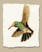 Watercolor  Pyrography - Miniature Broad Billed Hummingbird by Cate McCauley