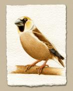 European Pyrography - Miniature European Haw Finch by Cate McCauley