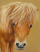 Miniatures Drawings - Miniature Pony Colt by Margaret Stockdale