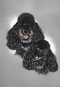 Black Curly Hair Pastels Prints - Miniature Poodles Print by Patricia Ivy