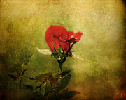 Jai Johnson - Miniature Red Rose I