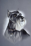 Pair Pastels Framed Prints - Miniature Schnauzer Framed Print by Patricia Ivy