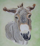 Scratchboard Paintings - Miniature Sicilian Donkey by Fay De Jong