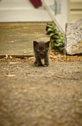 Vet Photo Posters - Miniature Stalker Poster by Heather Applegate
