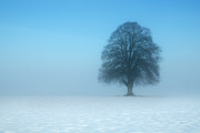 Sparse Art - Minimalist Winter by David Augustin