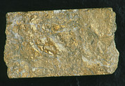 Gold Mine Photos - Mining Drill Core Sample With Gold Content by Kaj R. Svensson