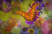 Gulf Fritillary Photos - Miracles Abound by Bonnie Barry