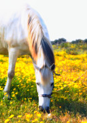 Gray Horse Photos - Mirage by Stylianos Kleanthous