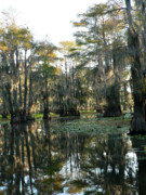 Cypress Swamps Framed Prints - Mirrored Waters Framed Print by Joy Tudor