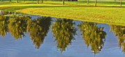Reflection On Pond Prints - Mirroring Trees Print by Heiko Koehrer-Wagner