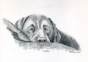 Sleeping Dog Drawings Prints - Mischa Sleeping Print by Sherri Strikwerda