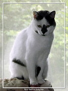 Canvas  Black And White Cat Photos - Miss Jerrie Cat with Watercolor Effect by Rose Santuci-Sofranko