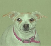 Terriers Pastels - Miss Molly by Pamela Humbargar