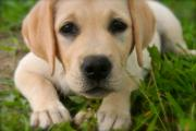 Puppy Photo Originals - Miss Torry by Paula Deutz