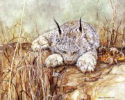 Bobcat Kitten Prints - Missed Lunch Print by Nonie Wideman