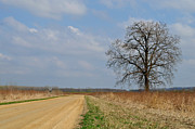 Country Dirt Roads Prints - Mississippi Flats Print by Dennis Stanton