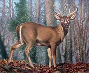 Missouri Whitetail Deer Print by Hans Droog