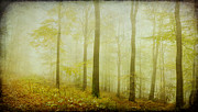 Mist In The Woods Print by Iris Lehnhardt