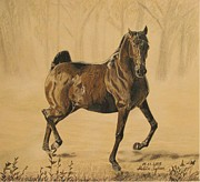 Wild Horse Drawings - Mistical horse by Melita Safran