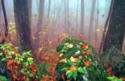 Misty Autumn Woodland Print by Thomas R Fletcher