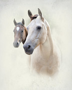Quarterhorses Posters - Misty Poster by Betty LaRue