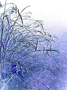 Haze Photo Prints - Misty Blue Print by Will Borden