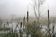 Reed Bed Prints - Misty day Print by Heiko Koehrer-Wagner