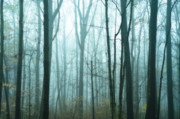 Disturbing Metal Prints - Misty Forest Metal Print by John Greim