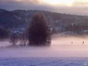 Snowscape Digital Art - Misty morning 2 by Gun Legler