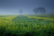 Spring Landscape Art - Misty Morning in the Field by Iris Greenwell