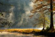 Cypress Trees Photos - Misty Morning in the Forest by Iris Greenwell