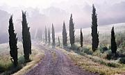 Italian Cypress Photo Acrylic Prints - Misty Morning in Tuscany Acrylic Print by Marion McCristall