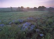 Oklahoma Landscapes Posters - Misty Morning Over Prairie Tallgrass Poster by Tim Fitzharris