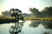 Alabama Crimson Tide Prints - Misty Morning Pond Print by Michael Thomas