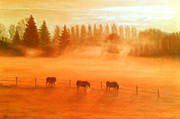 Misty Morning Print by Ronald Haber