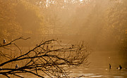 Autumn Colours Photos - Misty Sunbeams by Dawn OConnor