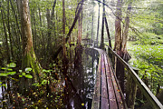 Florida Bridges Prints - Misty Walk Print by Debra and Dave Vanderlaan