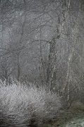 Veiled Prints - Misty Winter Day Print by Odd Jeppesen