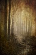 Aged Framed Prints - Misty Woodland Path Framed Print by Meirion Matthias