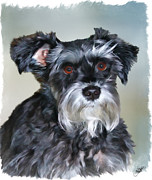 Mini Schnauzer Digital Art - Mitzi by Tom Schmidt