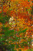 Indiana Autumn Prints - Mix N Match Print by Ed Smith
