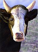 Cow Framed Prints - Mmmmm Framed Print by Catherine G McElroy