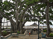 Banyan Tree Framed Prints - Moana Surfrider Banyan Court - Waikiki Beach Framed Print by Daniel Hagerman