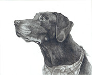 Chocolate Lab Drawings - Mocha In Loving Memory by CarrieAnn Reda